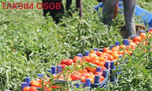 Tarımda Ergonomik Riskler ve Elle Çalışma